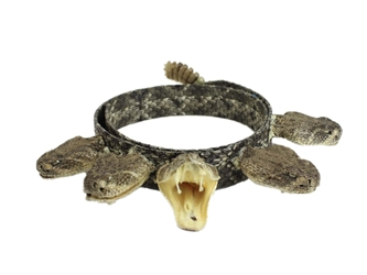 "1"" Real Rattlesnake Hat Band with Rattle and 5 Heads (1 Open & 4 Closed Mouths) rattlesnake hatbands"