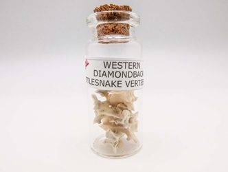 Real Rattlesnake Vertebrae in a Jar