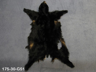 Black Bear Skin with Claws: Gallery Item