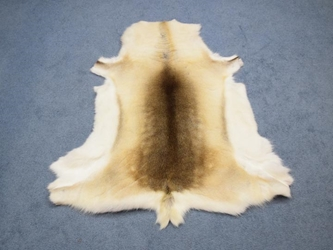 Reindeer Hide: Large: Gallery Item