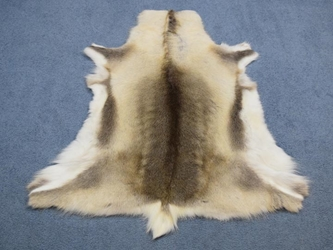 Reindeer Hide: Small: Gallery Item