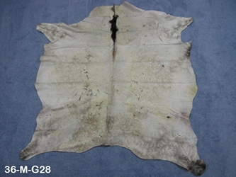 Horse Hide: Medium: Gallery Item