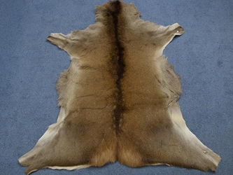 Red Deer Skin: Large: Gallery Item