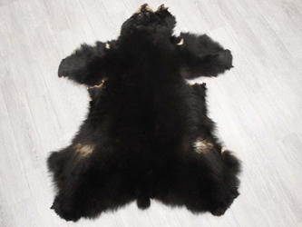 Black Bear Skin without Claws: Gallery Item