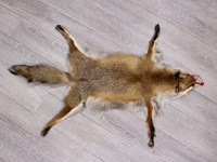 Red Fox Skin with Feet: Gallery Item