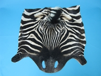 Zebra Face: Gallery Item