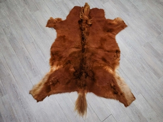 Icelandic Horse Hide: Gallery Item