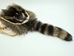 Raccoon Face and Tail Bag: Gallery Item - 430-10-G3010 (K24)