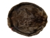 Extra-Wide Beaver Skin: #1: Large: Gallery Item - 50-1-L-G2482 (L18)