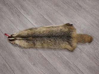 North American Badger Skin: Trading Post Grade: Gallery Item