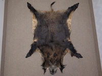 Wild Boar Skin: X-Large: Gallery Item